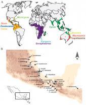 El ritmo de la evolución de las cícadas del género Ceratozamia