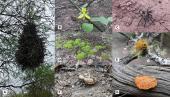 Los bosques tropicales secos y su contribución al bienestar humano