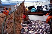 Cambio climático, manejo costero y pesca: desafío integral