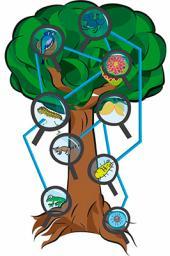 La conectividad de la naturaleza