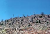 El ciclo del carbono en las zonas áridas mexicanas
