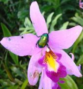 Escarabajos: Los buenos somos más