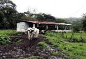 ¿Se puede lograr una ganadería sustentable?