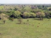 La ganadería y la pérdida de la biodiversidad