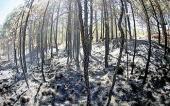 Incendios Forestales: una amenaza constante