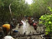 Preservar y proteger los manglares: tarea de todos