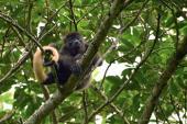 Primates mexicanos: voceros de las selvas e inspiración comunitaria para su conservación