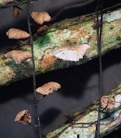 Hallazgos científicos en los nidos de las aves
