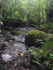 La función de la vegetación ribereña y la calidad de los ríos